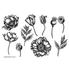set hand drawn black and white poppy vector image