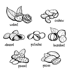 Set of hand drawn nuts vector