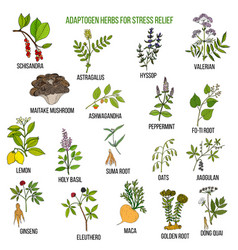 best adaptogen herbs for stress relief vector image