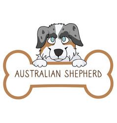 Cute cartoon australian shepherd on collar dog tag vector
