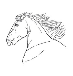 running horse head realistic drawing vector image