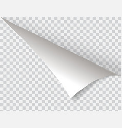 Shape of bent angle is free for filling vector