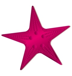 star fish icon image vector image