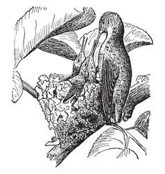 Bird feeding hatchlings vintage vector