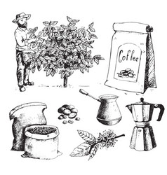Coffee production hand drawn farmer picking beans vector
