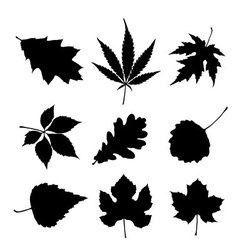 Leaf silhouette set vector