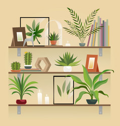 Plants on shelf houseplants in pot on shelves vector