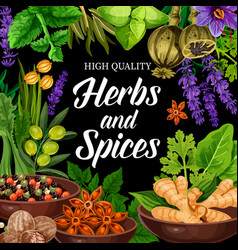 seasonings herbs and spices shop poster vector image