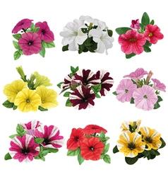 Set of multicolored petunias vector