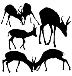 Antelope Silhouettes vector image