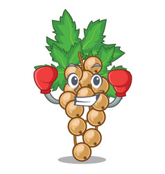 Boxing white currant isolated with the cartoons vector