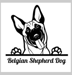 Dog head belgian shepherd dog breed black and vector