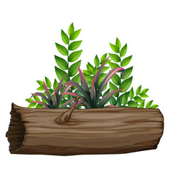 Green leaves and log on white background vector