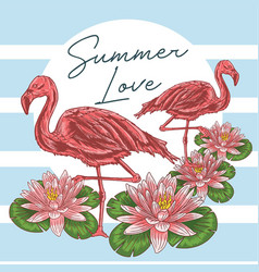 summer flaminggo vector image