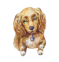 watercolor cocker spaniel dog vector image
