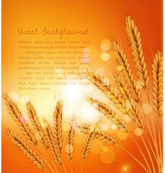 background with gold ears of wheat and sunrays vector image