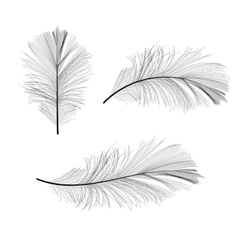 Bird Feather Hand Drawn vector image