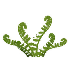 fern green leaves of plant isolated on white vector image