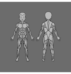 Anatomy of children muscular system exercise and vector