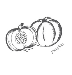 pumpkin in a cut with seeds is painted by ha vector image vector image