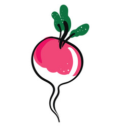 cool radish on white background vector image