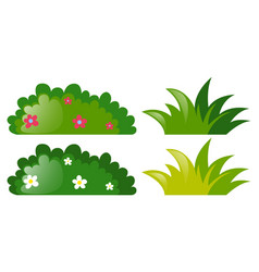 four bushes with and without flowers vector image