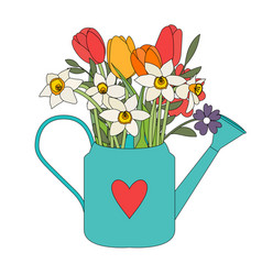 Garden watering can with spring flowers tulips vector