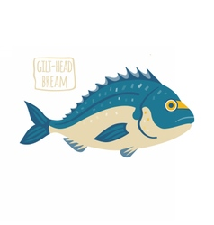 Gilt-Head Bream vector image