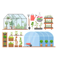greenhouse flower plant vegetable cultivation set vector image