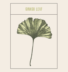 ginkgo leaf drawn sketch vector image vector image