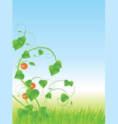 vine tomatoes vector image vector image