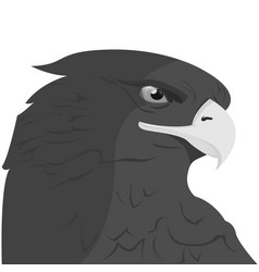 eagle head logo template hawk mascot graphic vector image