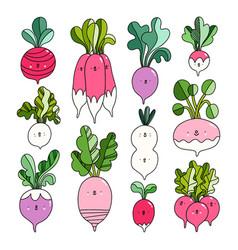 Fresh farm market radish cute characters vector