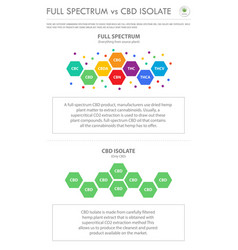 Full spectrum vs cbd isolate vertical business vector