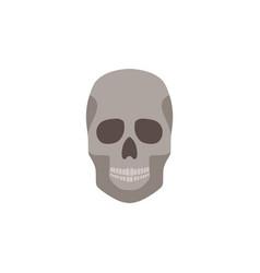 human skull anatomically correct front view flat vector image