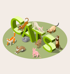 purebred cats isometric background vector image