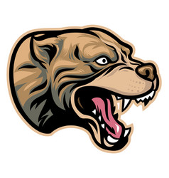 angry pitbull head vector image vector image