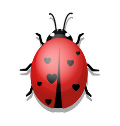 ladybug with hearts on white background vector image vector image