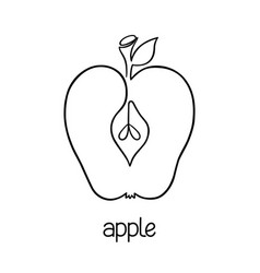 apple fruit line art vector image