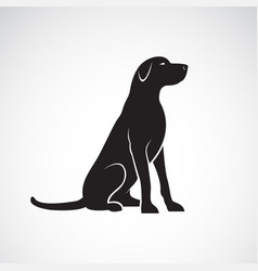 Labrador retriever dog isolated on a white vector