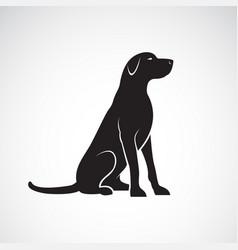 labrador retriever dog isolated on a white vector image