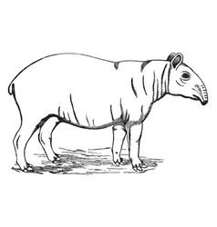 Malayan tapir vintage vector