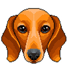 Pixel dachshund dog portrait detailed isolated vector