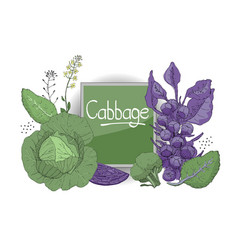set with fresh cabbage vector image