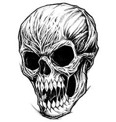 skull drawing line work vector image