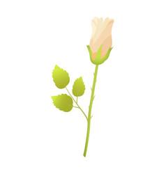 beige rose flower closed bud bossom green leaves vector image vector image
