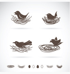 bird and nests on white background vector image vector image