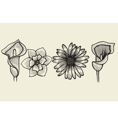 flowers - hand drawn collection vector image vector image