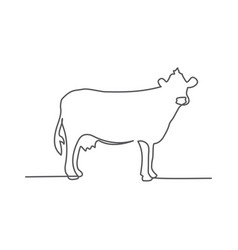 cow one line drawing on white background vector image