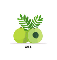 Fresh juicy amla indian gooseberry icon tasty ripe vector